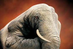 Elephant on brown Hand Painting | Guido Daniele