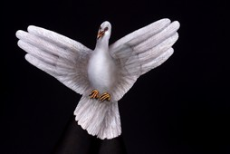 White Dove Hand Painting | Guido Daniele