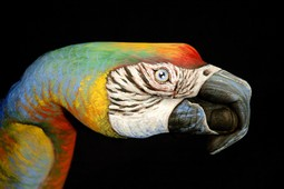 Parrot on black Hand Painting | Guido Daniele