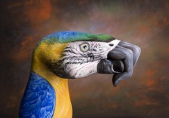 Parrot on brown Hand Painting | Guido Daniele
