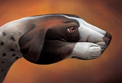 Pointer Dog Hand Painting | Guido Daniele