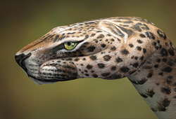 Leopard Hand Painting | Guido Daniele