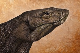 Komodo Dragon Hand Painting | Guido Daniele