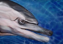 Dolphin Hand Painting | Guido Daniele