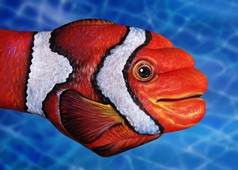 Clown Fish Hand Painting | Guido Daniele