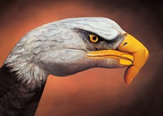 Bald Eagle on brown Hand Painting | Guido Daniele