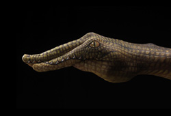 Crocodile on black Hand Painting | Guido Daniele