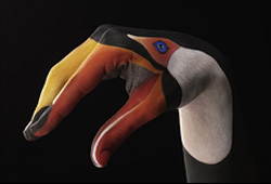 Toucan on black Hand Painting | Guido Daniele