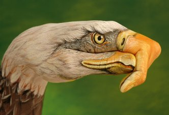 Bald Eagle on green - Ph. Guido Daniele