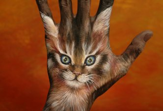 Cat on brown - Ph. Guido Daniele