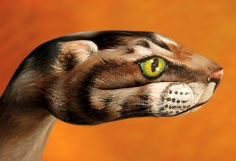 Cat on orange - Ph. Guido Daniele