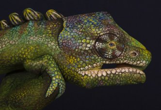 Chameleon - Ph. Guido Daniele