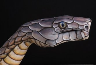 Cobra on black - Ph. W.D. Bùttcher