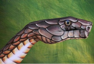 Cobra on green - Ph. Guido Daniele