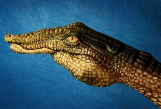 Crocodile - Ph. Guido Daniele