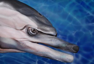 Dolphin - Ph. Guido Daniele
