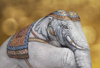 Elephant White on gold - Ph. Andric