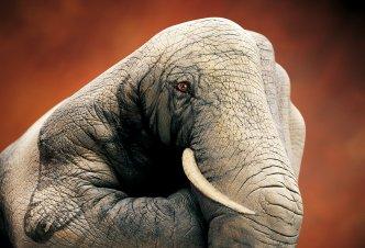 un éléphant rencontre un boa
