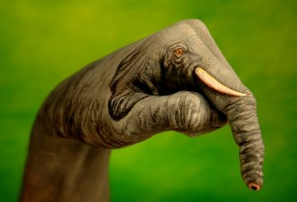 Elephant on green - Ph. G.Daniele