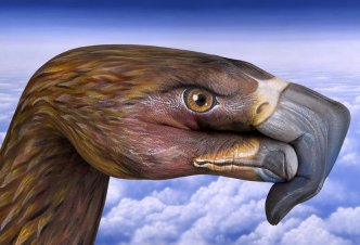 European Eagle - Ph. Guido Daniele