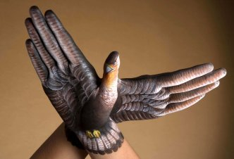 Falcon 2 hands - Ph. Dan Nourie
