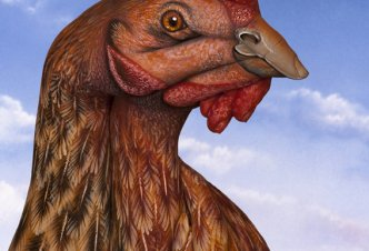 Hen - Ph. Guido Daniele