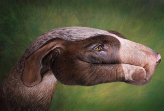 Hound Dog - Ph. Guido Daniele