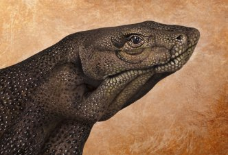 Komodo Dragon - Ph. Guido Daniele
