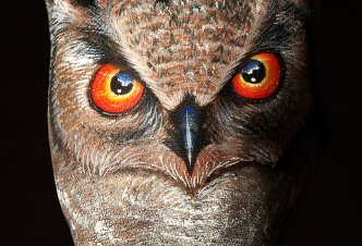 Owl - Ph. Guido Daniele