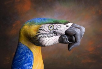Parrot on brown - Ph. Guido Daniele