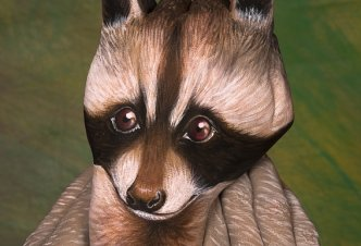 Raccoon - Ph. Guido Daniele