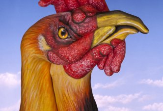 Rooster - Ph. Guido Daniele