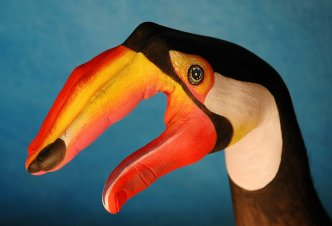 Toucan - Ph. Guido Daniele