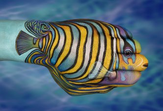 Tropical Fish - Ph. Guido Daniele