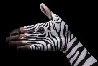 Zebra on black - Ph. W.D. Bùttcher