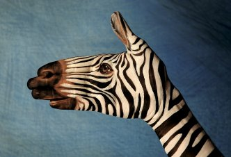 Zebra on blu - Ph. Guido Daniele